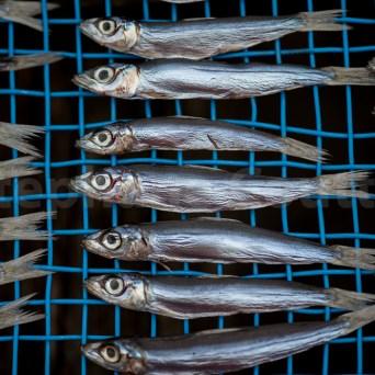 Sechage de poissons -Daiou cho -Japon
