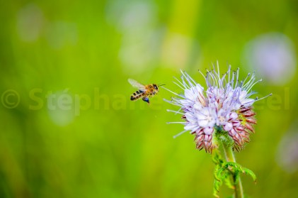 Pollinisation suspendue