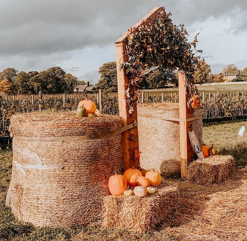 Pumpkin Picking At Brockbushes Farm, Corbridge
