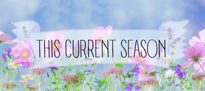 #thiscurrentseason // stephanieorefice.net