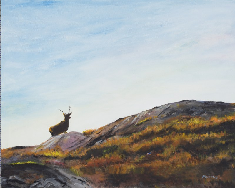 Hebridean Stag by Stpehen Murray - Fine art print,