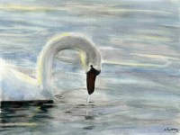 Sunlit Swan Fine Art Giclee Print by Stephen Murray