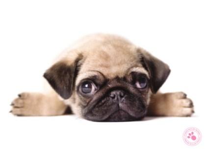Sterkte wensen overlijden hond 5
