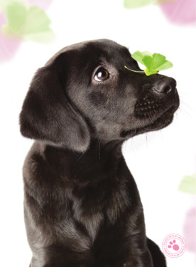 Sterkte wensen overlijden hond 6