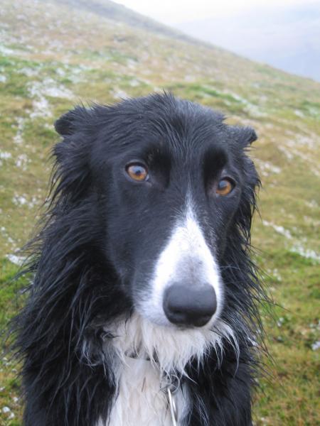 A damp Pippa