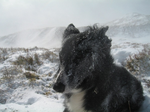 Pippa enjoying the snow