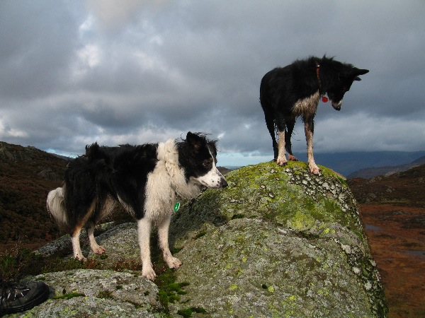 Pippa and Flash reach the summit of Great Crag