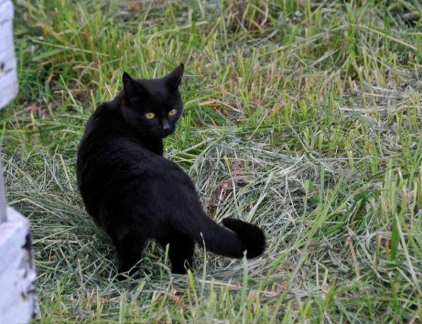 6-cat