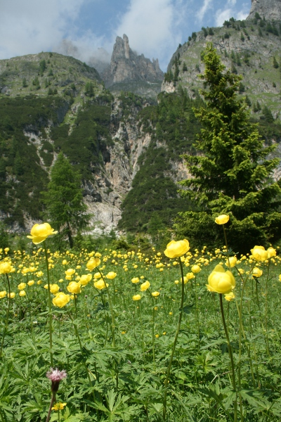 Lovely meadows of Button d'Oro in Pian delle Comelle.