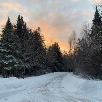 Photo of winding country road stretching between tall evergreen trees weighed down by snow in winter time at sunset. The sky is mottled blue and yellow with patchy clouds.