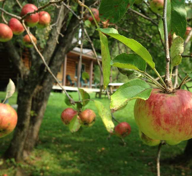 Read more about the article Apples and Log Cabins in Vermont