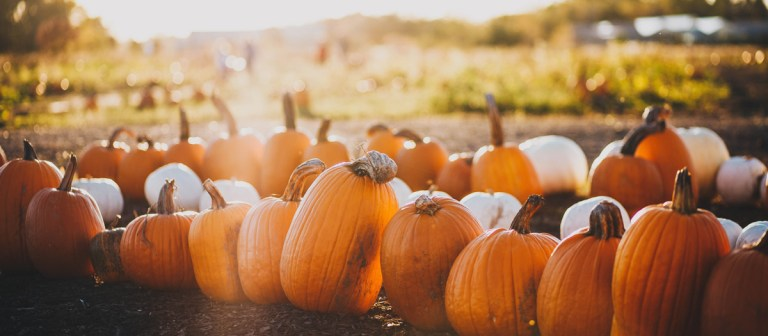 Planning the Perfect Fall Vacation: Fall in Vermont