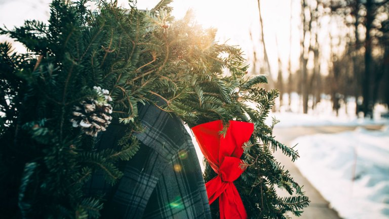 Vermont Vacation: Cut Your Own Christmas Tree
