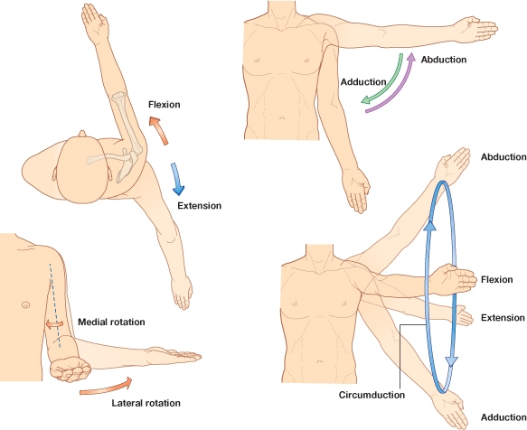 pokreti-u-ramenom-pojasu