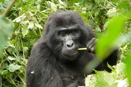 Image: Ugandan Bestiary