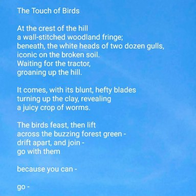 The Touch of Birds