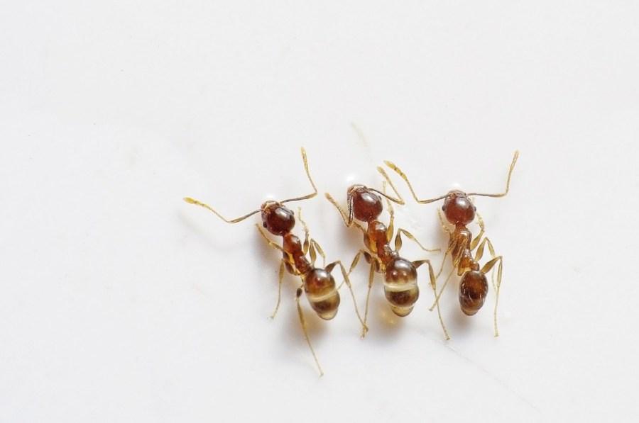 3 termites