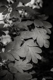 """A black and white nature photograph from a project titled """"Highlights of the Forest"""" captured at the Federation Forest State Park near Greenwater, Washington."""