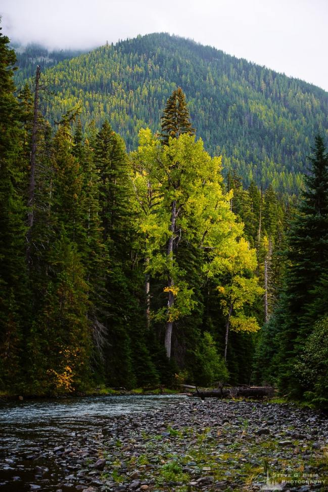 A landscape photograph of the early Autumn colors of the Okanogan-Wenatchee National Forest along the Bumping River in Yakima County, Washington.