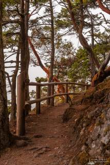 A photograph of the Bowman Bay Trail along the bluffs of Deception Pass State Park, Washington on a foggy summer morning.
