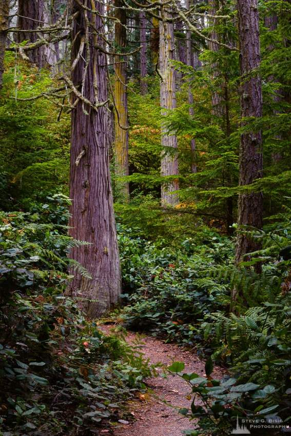 A nature photograph of the Bowman Bay Trail through the forest at Deception Pass State Park, Washington.
