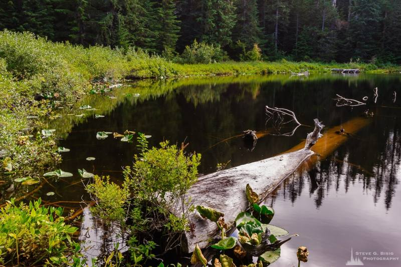 A landscape photograph of a partially submerged log in an unknown name lake in the Gifford Pinchot National Forest in Lewis County, Washington.