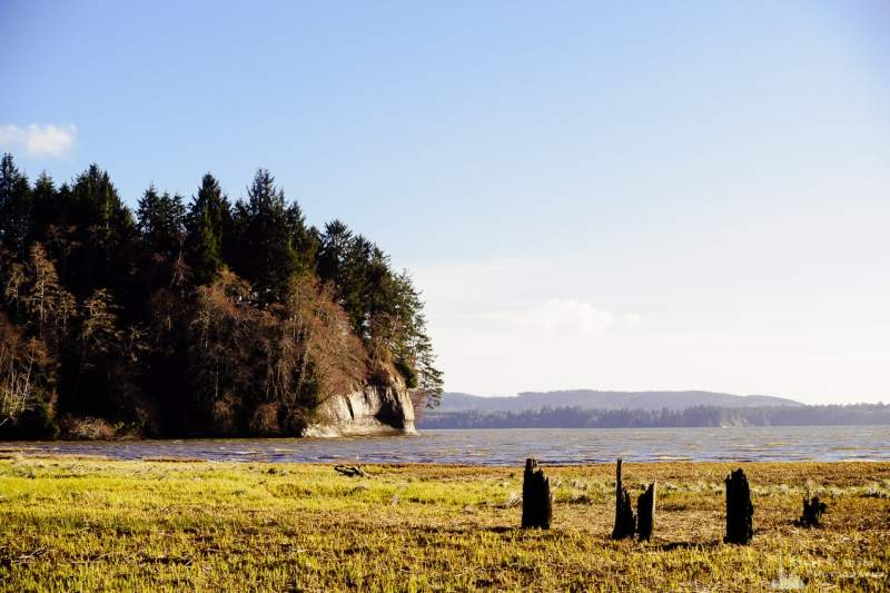 A landscape photograph of the shoreline of Willapa Bay near Nemah Road in rural Pacific County, Washington.