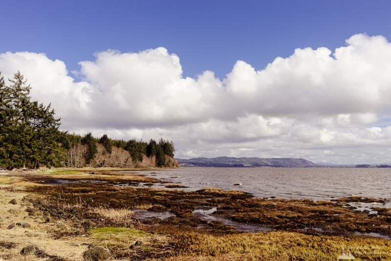 A landscape photograph of the coastline along the north shore of Willapa Bay in Pacific County, Washington.