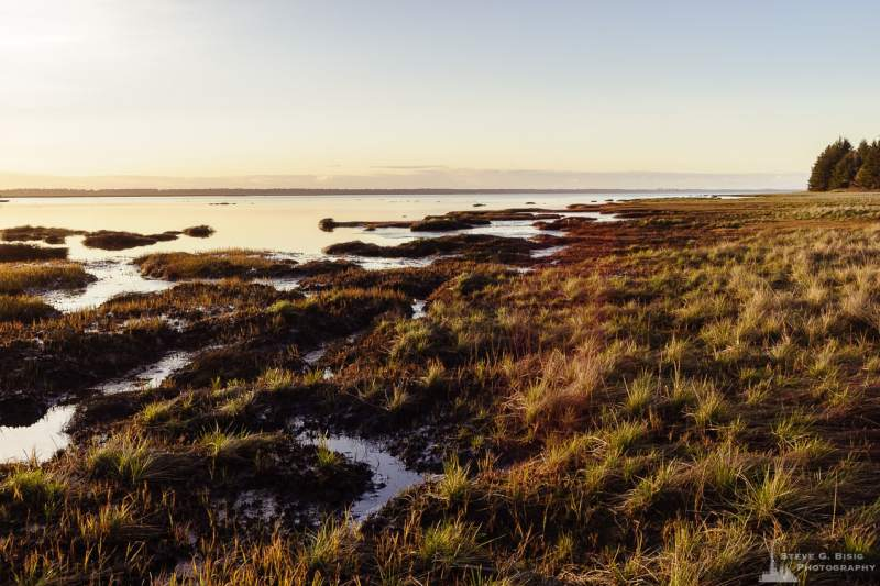A landscape photograph of the shoreline of southern Willapa Bay in rural Pacific County, Washington.