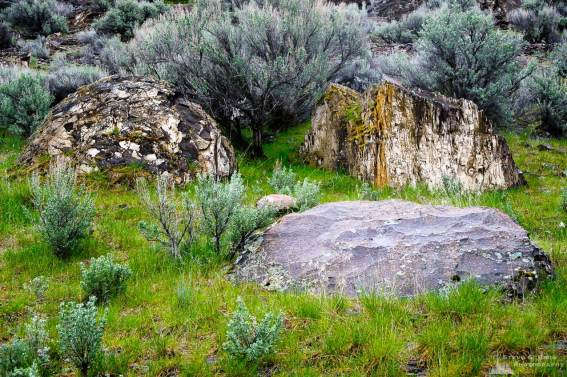 A nature photograph of three rocks in the Potholes Coulee as viewed along the Ancient Lakes Trail in the Quincy Lakes Unit of the Columbia Basin Wildlife Area in Grant County, Washington.