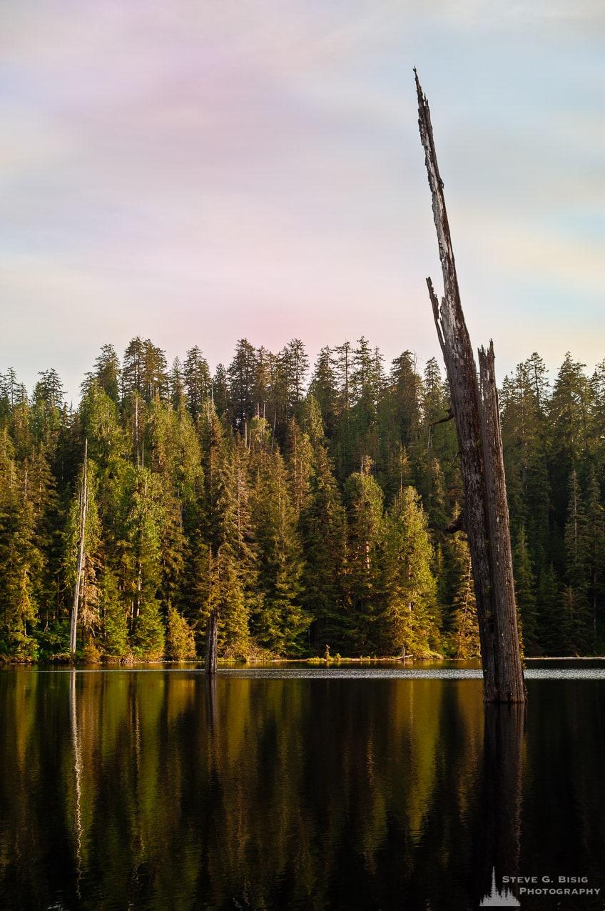 Old Snag, Irely Lake, Olympic National Park, Washington, 2017
