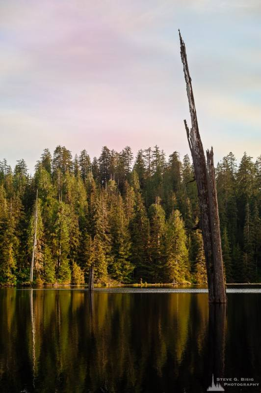 A landscape photography of an old snag in the middle of Irely Lake in the Olympic National Park, Washington.