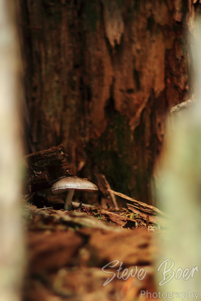 Mushroom in hollow tree