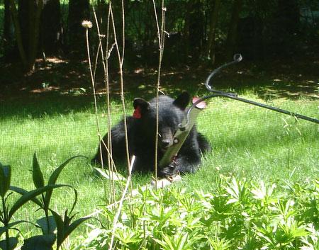 Bear02Small.jpg
