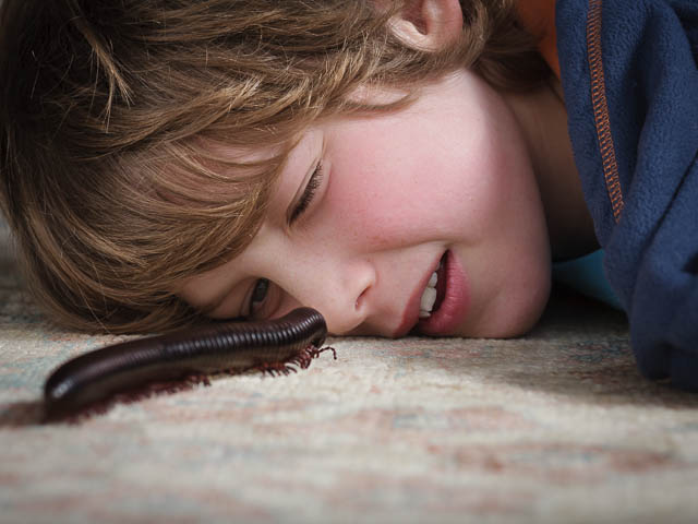Giant African Train Millipede Crawling On Carpet With Young Boy