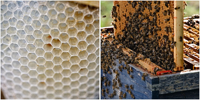 Beehive Honeycomb And Bees