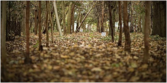 Hunter Field Target Ground View