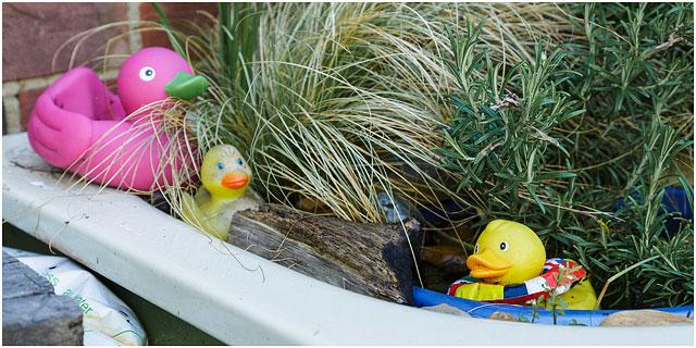 Plastic Ducks In Bathtub With Foliage