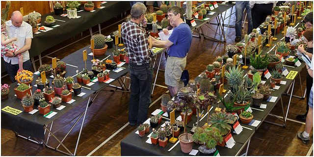 Portsmouth Branch British Cactus And Succulent Society Show 2014 View Of Show Floor