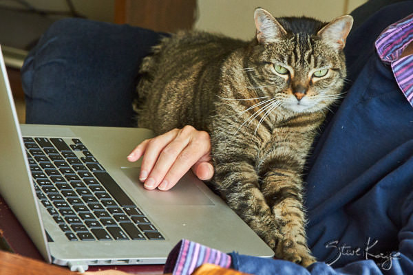 Olivia Helping Keep a Hand from Floating Away, in article: How to Achieve Success as a Cat