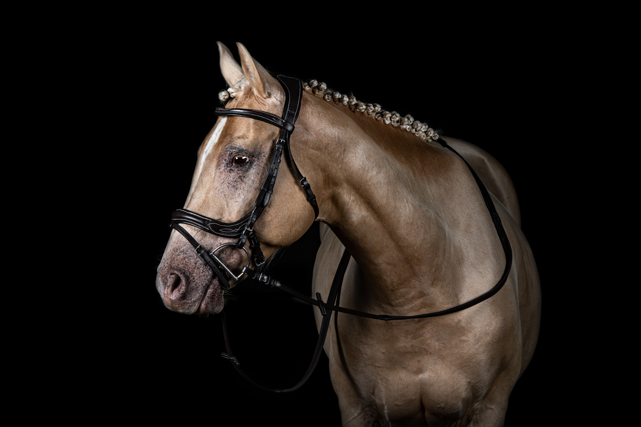 cheval blanc québec