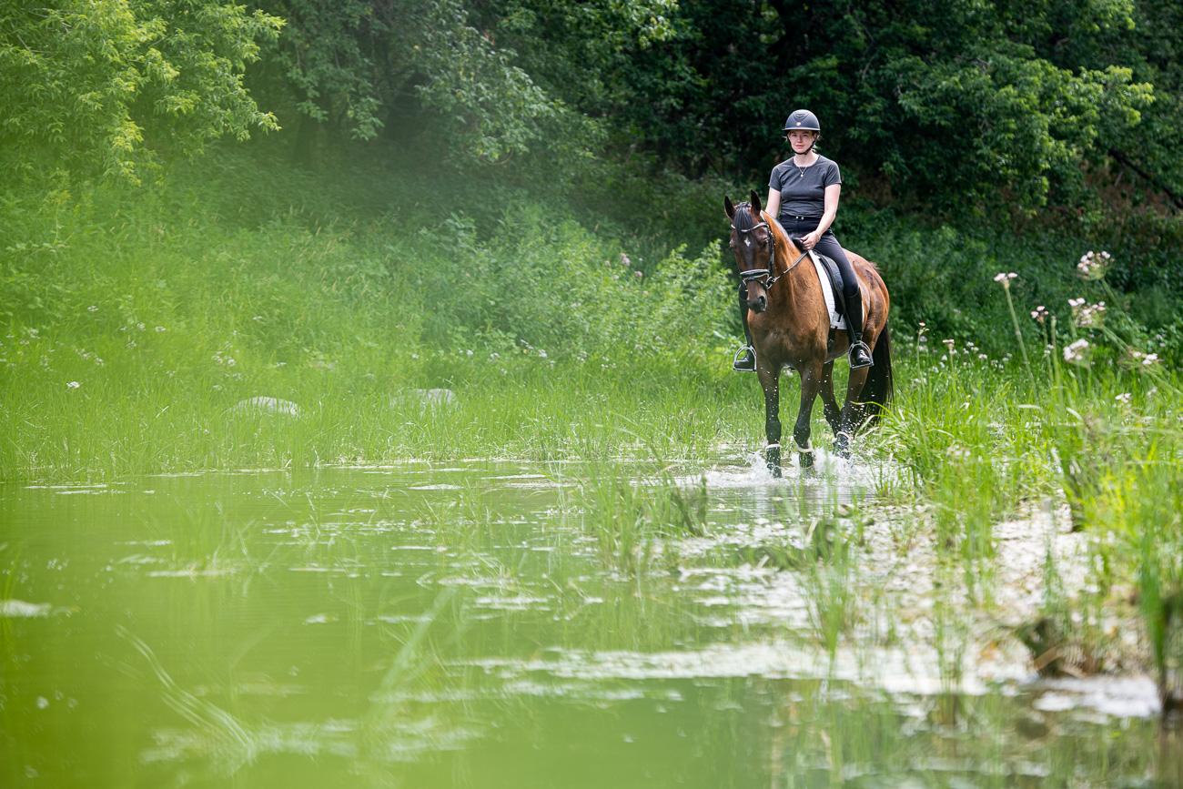cheval rivière chambly