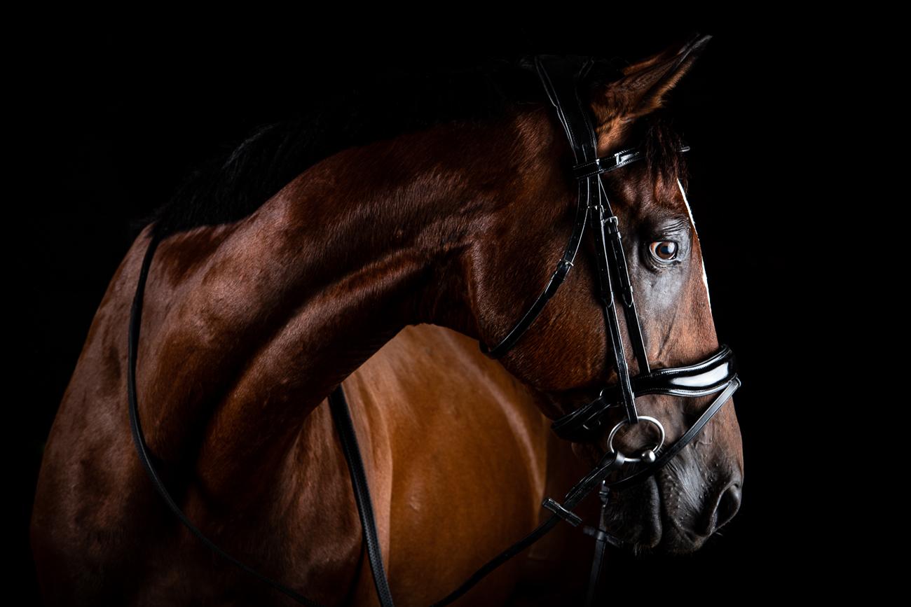 prestigio equestrian cheval québec