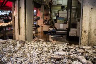Squid, Fish Stall, Venice