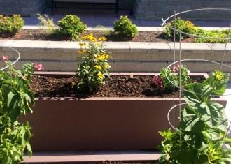 SHAG garden in Federal Way
