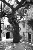 Tree in Eze.