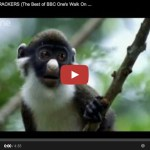 ANIMAL CRACKERS (The Best of BBC One's Walk On The Wild Side)