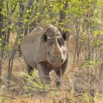 RFID-Tagged Rhinos And Smart Watering Holes: The Google-Funded Tech Fighting Poaching