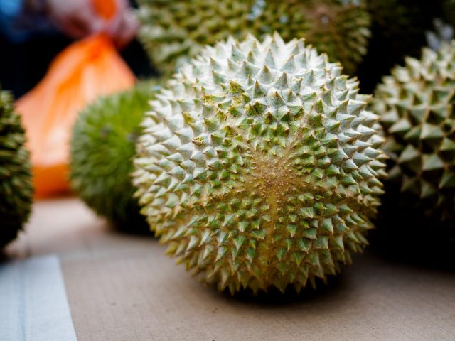 Jual Bibit Durian Musang King di Pekalongan