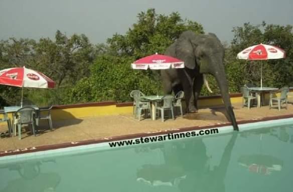 Stewart Innes Ghana elephant pool